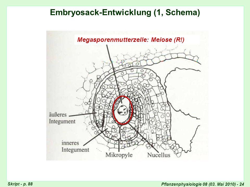 Pflanzenphysiologie 08 (03. Mai 2010) - 24 Embryosack-Entwicklung (1, Schema) Megasporenmutterzelle: Meiose (R!) Skript - p. 88