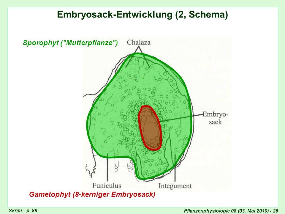 Pflanzenphysiologie 08 (03. Mai 2010) - 26 Embryosack-Entwicklung (2, Schema) Gametophyt (8-kerniger Embryosack) Sporophyt (