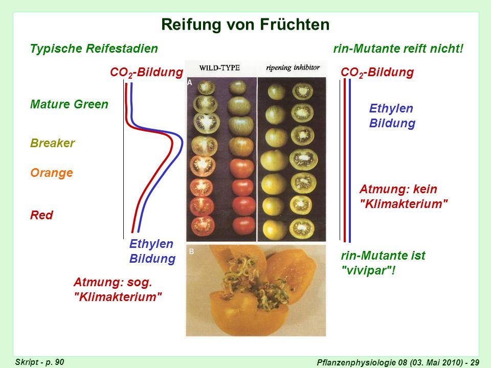 Pflanzenphysiologie 08 (03. Mai 2010) - 29 Reifung von Früchten Typische Reifestadien Mature Green Breaker Orange Red rin-Mutante reift nicht! rin-Mut