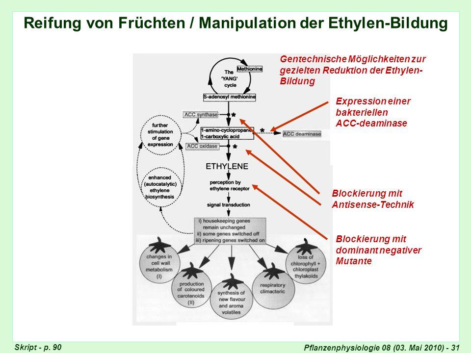 Pflanzenphysiologie 08 (03. Mai 2010) - 31 Reifung von Früchten / Manipulation der Ethylen-Bildung Gentechnische Möglichkeiten zur gezielten Reduktion