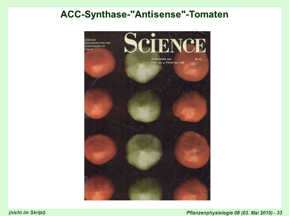 Pflanzenphysiologie 08 (03. Mai 2010) - 33 ACC-Synthase-
