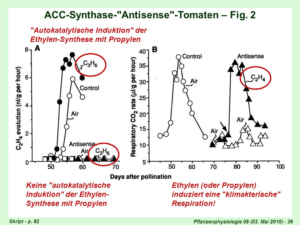 Pflanzenphysiologie 08 (03. Mai 2010) - 36 ACC-Synthase-