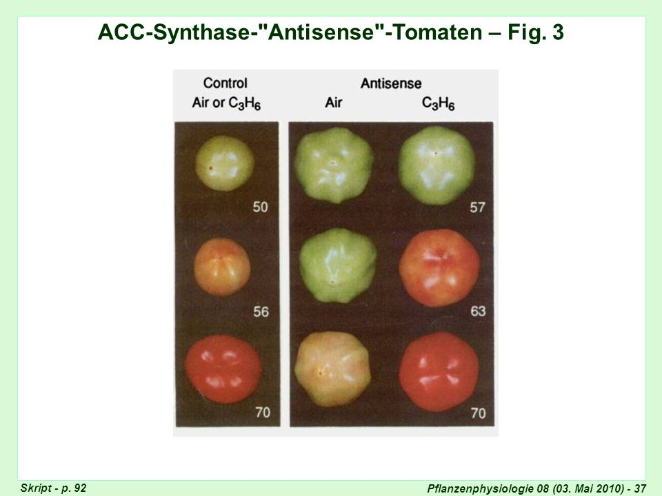 Pflanzenphysiologie 08 (03. Mai 2010) - 37 ACC-Synthase-