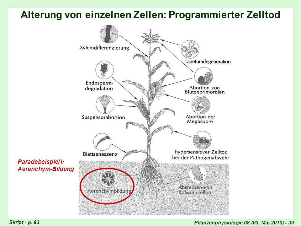 Pflanzenphysiologie 08 (03. Mai 2010) - 39 Alterung von einzelnen Zellen: Programmierter Zelltod Seneszenz-Typen Paradebeispiel I: Aerenchym-Bildung S