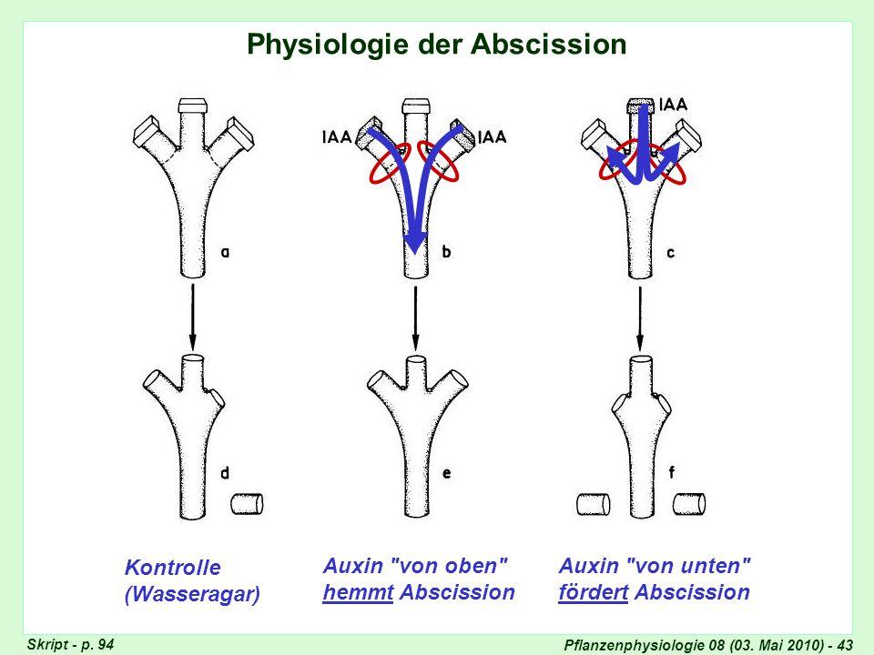 Pflanzenphysiologie 08 (03. Mai 2010) - 43 Physiologie der Abscission Auxin