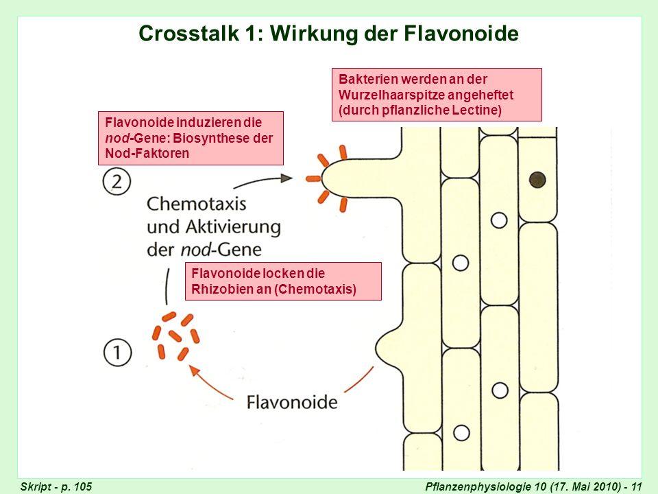 Pflanzenphysiologie 10 (17.Mai 2010) - 11 Crosstalk 1: Wirkung der Flavonoide Skript - p.