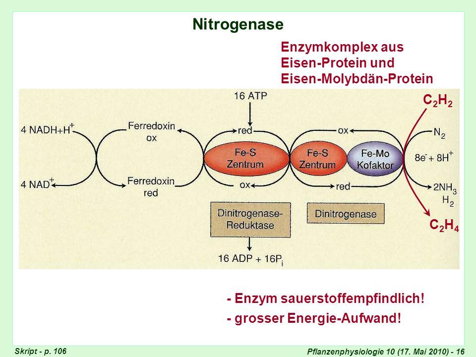 Pflanzenphysiologie 10 (17.Mai 2010) - 16 Nitrogenase (I) Nitrogenase Skript - p.