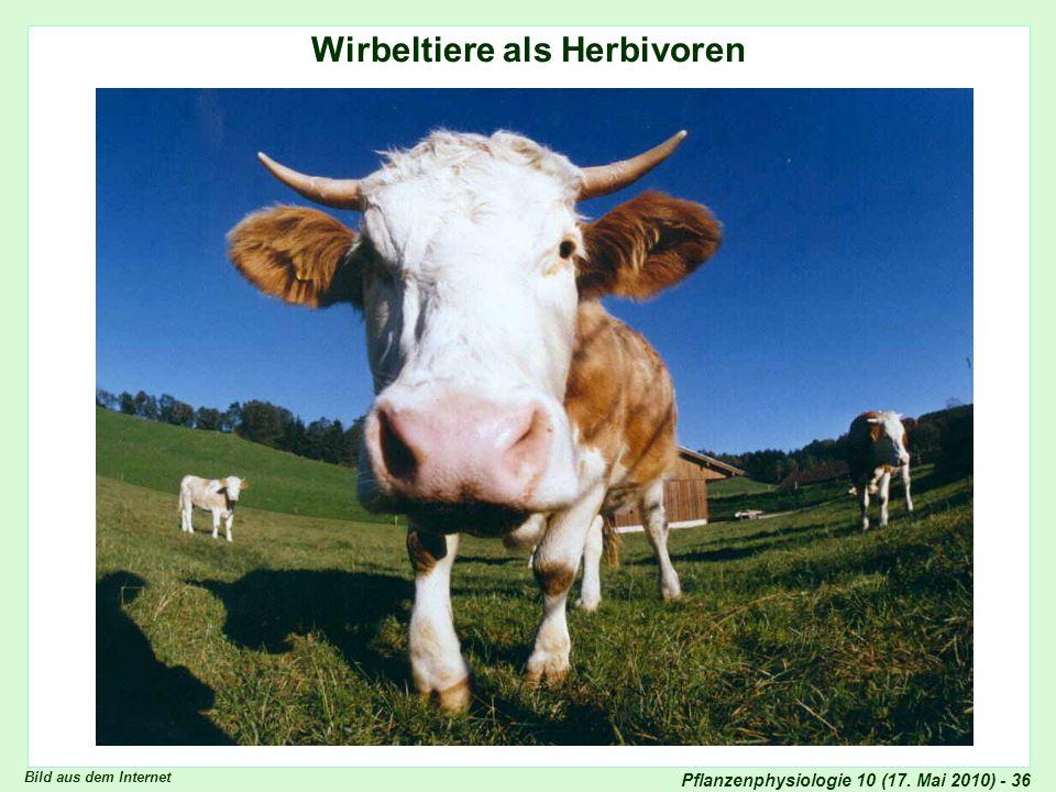 Pflanzenphysiologie 10 (17. Mai 2010) - 36 Wirbeltiere als Herbivoren Bild aus dem Internet