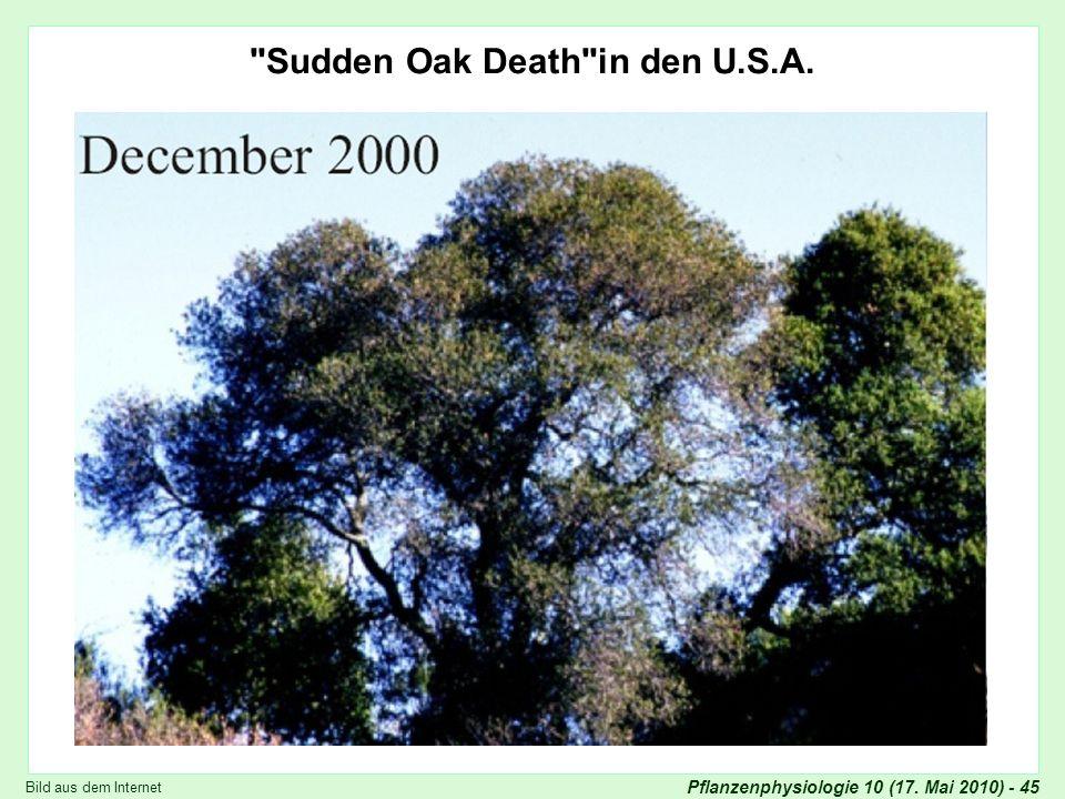 Pflanzenphysiologie 10 (17.Mai 2010) - 45 Phytophthora ramorum Sudden Oak Death in den U.S.A.