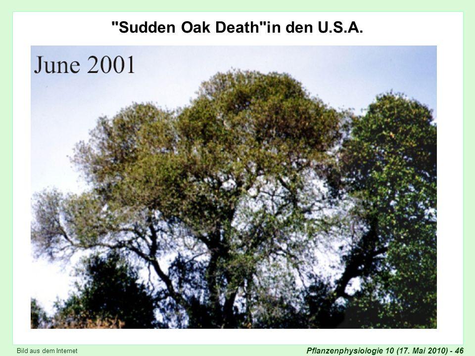 Pflanzenphysiologie 10 (17.Mai 2010) - 46 Sudden Oak Death in den U.S.A.