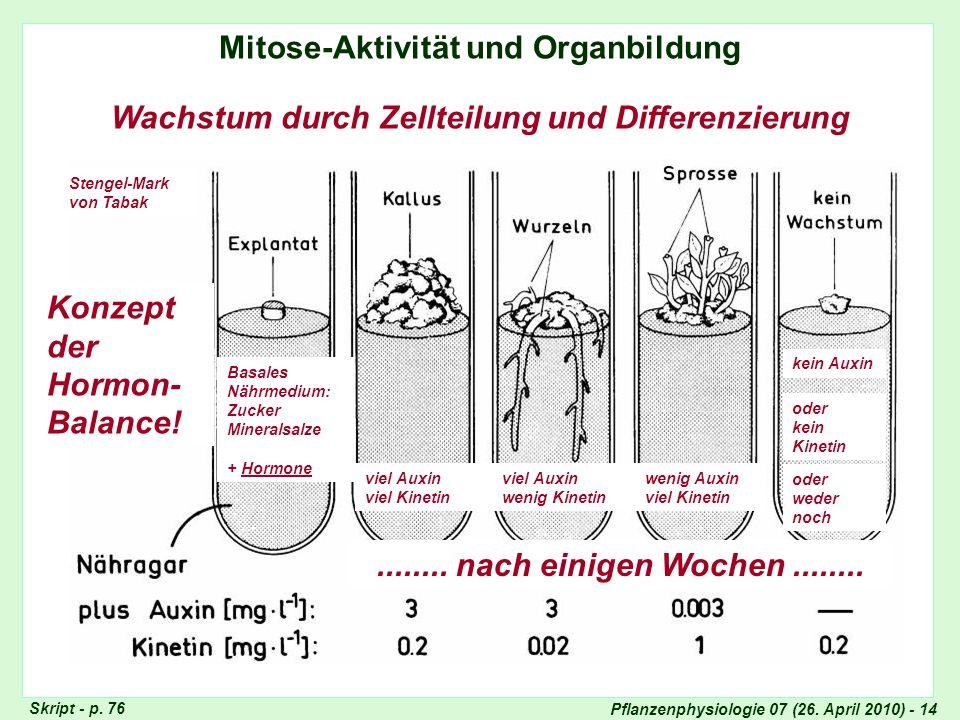 Pflanzenphysiologie 07 (26. April 2010) - 14 Mitose-Aktivität und Organbildung Wachstum durch Zellteilung und Differenzierung kein Auxin oder kein Kin