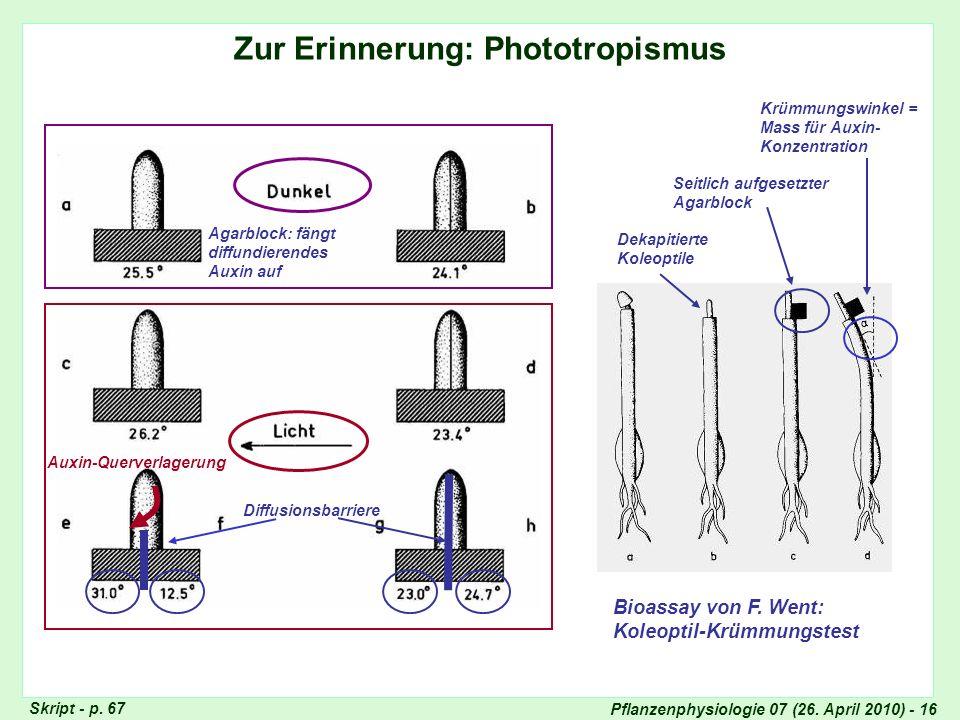 Pflanzenphysiologie 07 (26. April 2010) - 16 Zur Erinnerung: Phototropismus Agarblock: fängt diffundierendes Auxin auf Bioassay von F. Went: Koleoptil