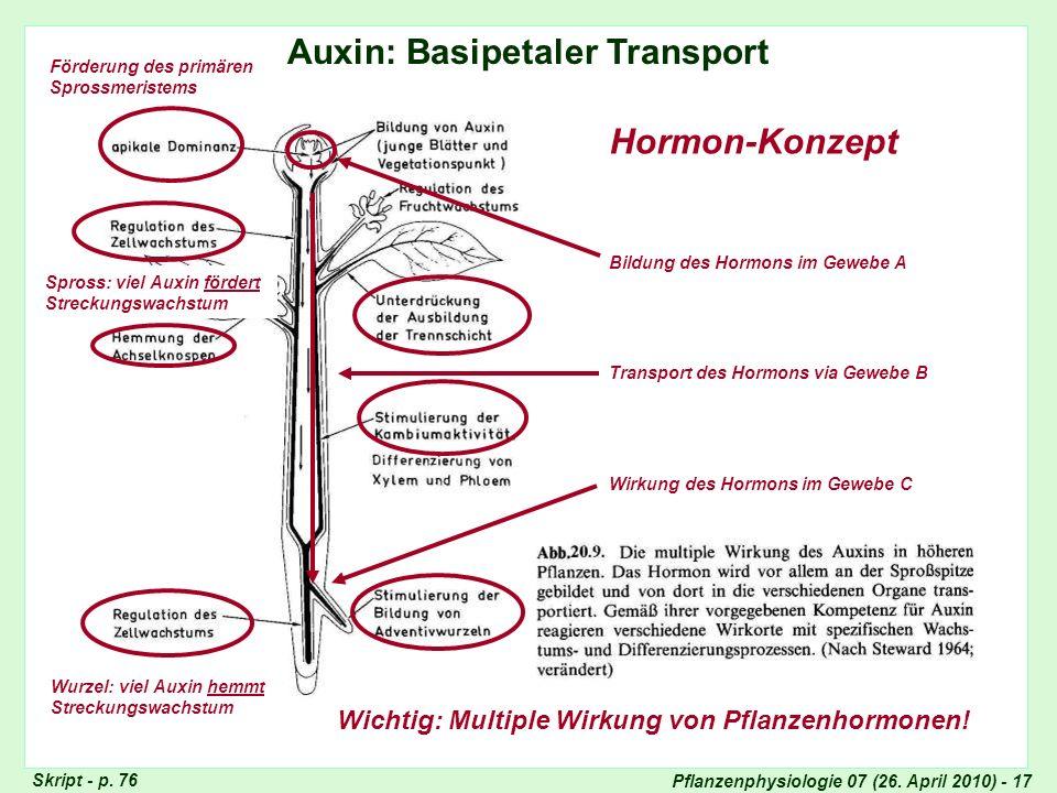 Pflanzenphysiologie 07 (26. April 2010) - 17 Auxin: Basipetaler Transport Hormon-Konzept Bildung des Hormons im Gewebe A Wirkung des Hormons im Gewebe