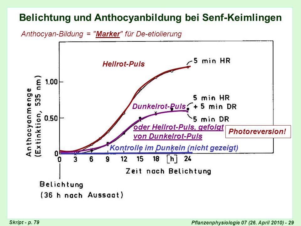 Pflanzenphysiologie 07 (26. April 2010) - 29 Belichtung und Anthocyanbildung bei Senf-Keimlingen Anthocyan-Bildung =