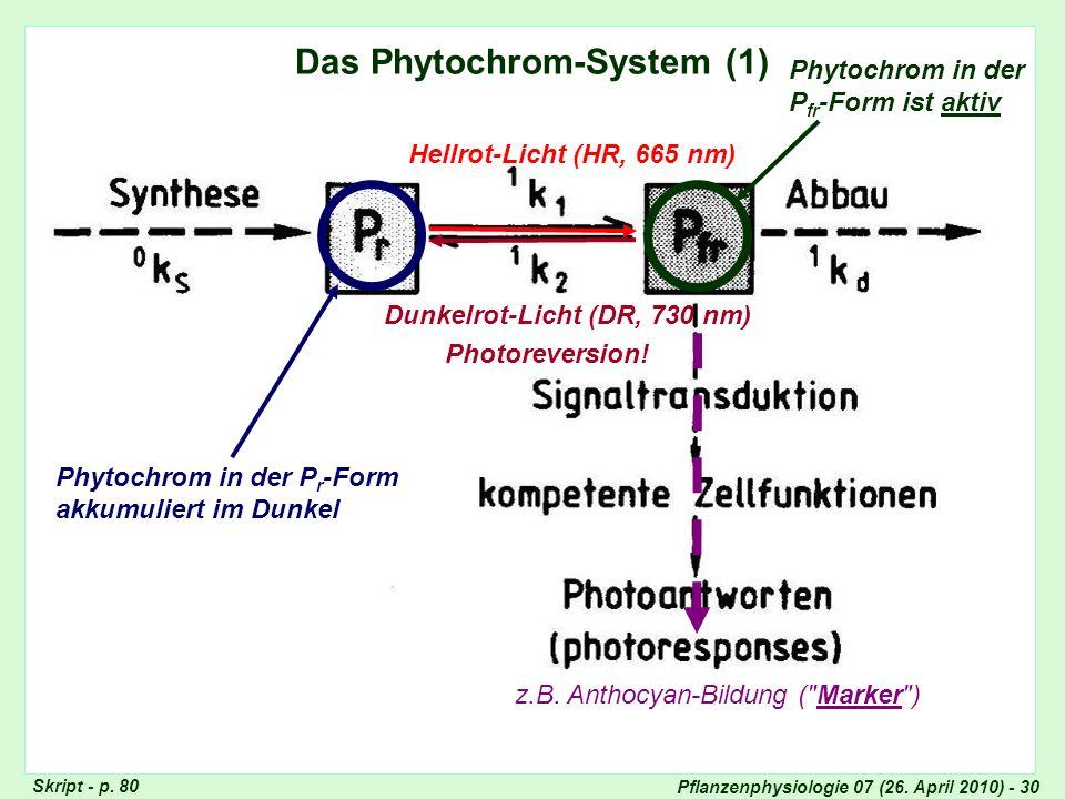 Pflanzenphysiologie 07 (26. April 2010) - 30 Das Phytochrom-System (1) Hellrot-Licht (HR, 665 nm) Dunkelrot-Licht (DR, 730 nm) Phytochrom in der P r -