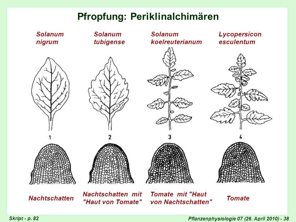 Pflanzenphysiologie 07 (26. April 2010) - 38 Pfropfung: Periklinalchimären Nachtschatten Nachtschatten mit