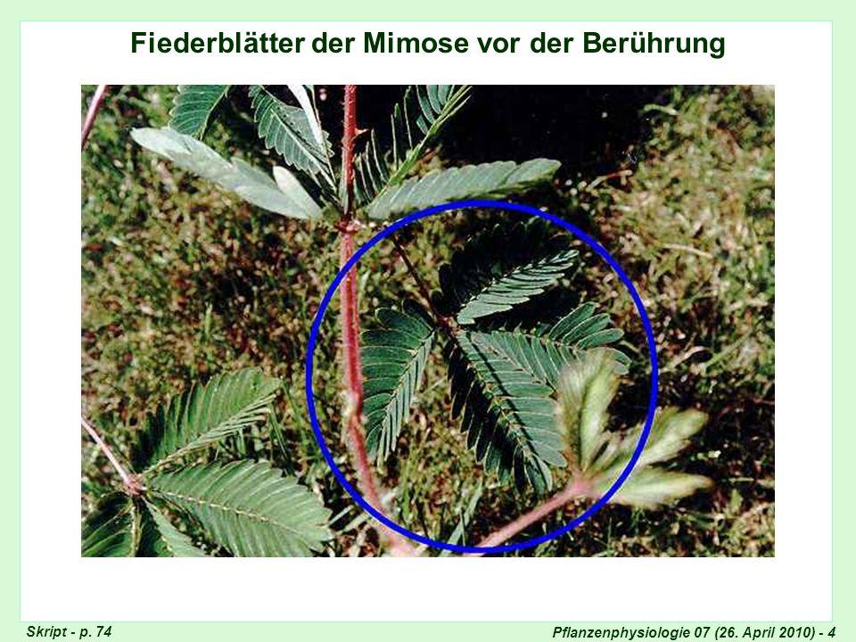 Pflanzenphysiologie 07 (26.April 2010) - 5 Fiederblätter der Mimose nach der Berührung Skript - p.