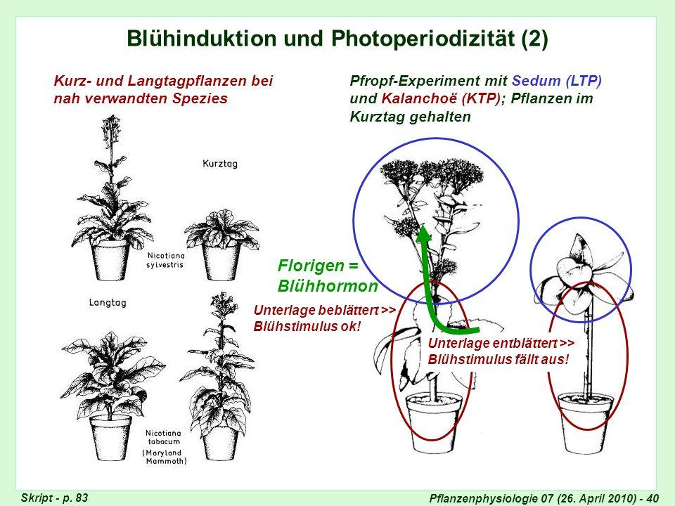 Pflanzenphysiologie 07 (26. April 2010) - 40 Blühinduktion und Photoperiodizität (2) Kurz- und Langtagpflanzen bei nah verwandten Spezies Pfropf-Exper