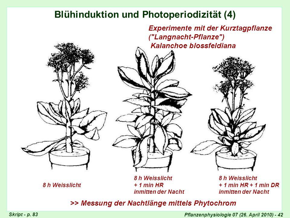 Pflanzenphysiologie 07 (26. April 2010) - 42 Blühinduktion und Photoperiodizität (4) 8 h Weisslicht 8 h Weisslicht + 1 min HR inmitten der Nacht 8 h W