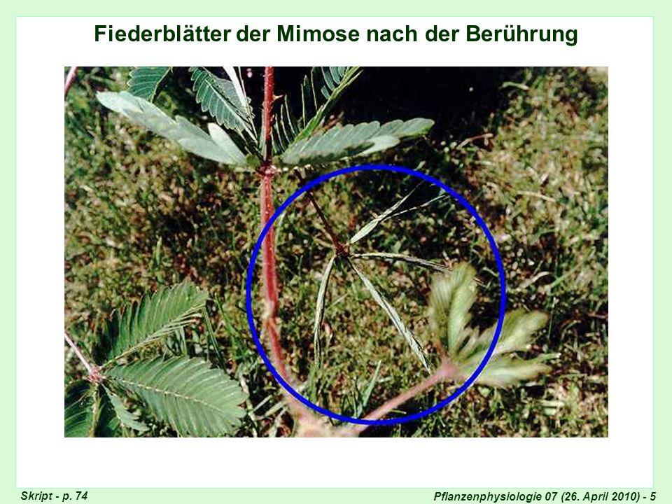 Pflanzenphysiologie 07 (26. April 2010) - 5 Fiederblätter der Mimose nach der Berührung Skript - p. 74