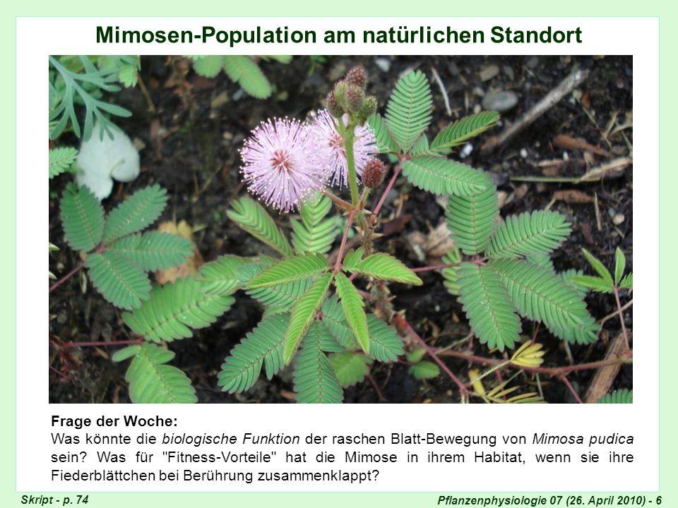 Pflanzenphysiologie 07 (26. April 2010) - 6 Mimosen-Population am natürlichen Standort Mimosen-Population in Kerala Skript - p. 74 Frage der Woche: Wa