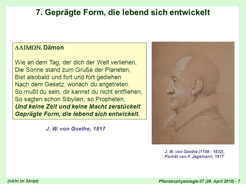 Pflanzenphysiologie 07 (26.April 2010) - 8 Metamorphose der Pflanzen...