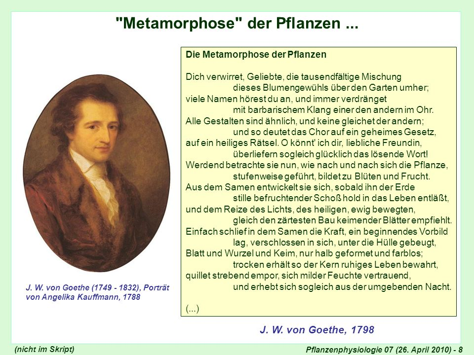 Pflanzenphysiologie 07 (26. April 2010) - 8