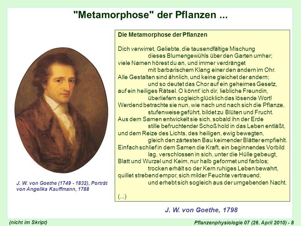 Pflanzenphysiologie 07 (26.April 2010) - 9 Geprägte Form, die lebend sich entwickelt...