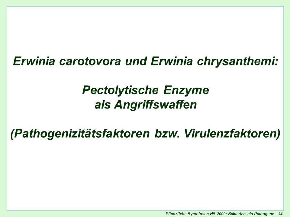 Pflanzliche Symbiosen HS 2009: Bakterien als Pathogene - 24 Erwinia chrysanthemi - Titel Erwinia carotovora und Erwinia chrysanthemi: Pectolytische En