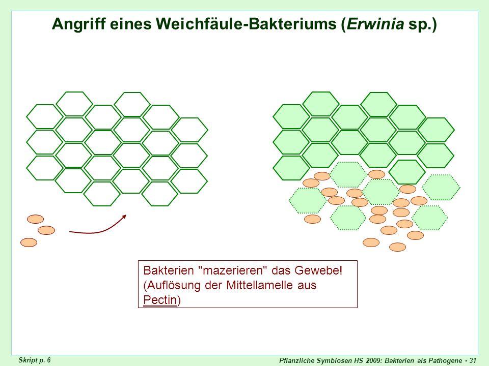 Pflanzliche Symbiosen HS 2009: Bakterien als Pathogene - 31 Angriff eines Weichfäule-Bakteriums (Erwinia sp.) Erwinia_carotovora_Radies Bakterien