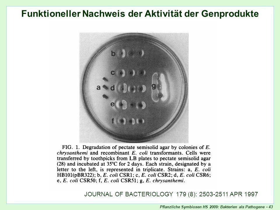 Pflanzliche Symbiosen HS 2009: Bakterien als Pathogene - 43 Funktioneller Nachweis der Aktivität der Genprodukte Pectinagar-Test JOURNAL OF BACTERIOLO