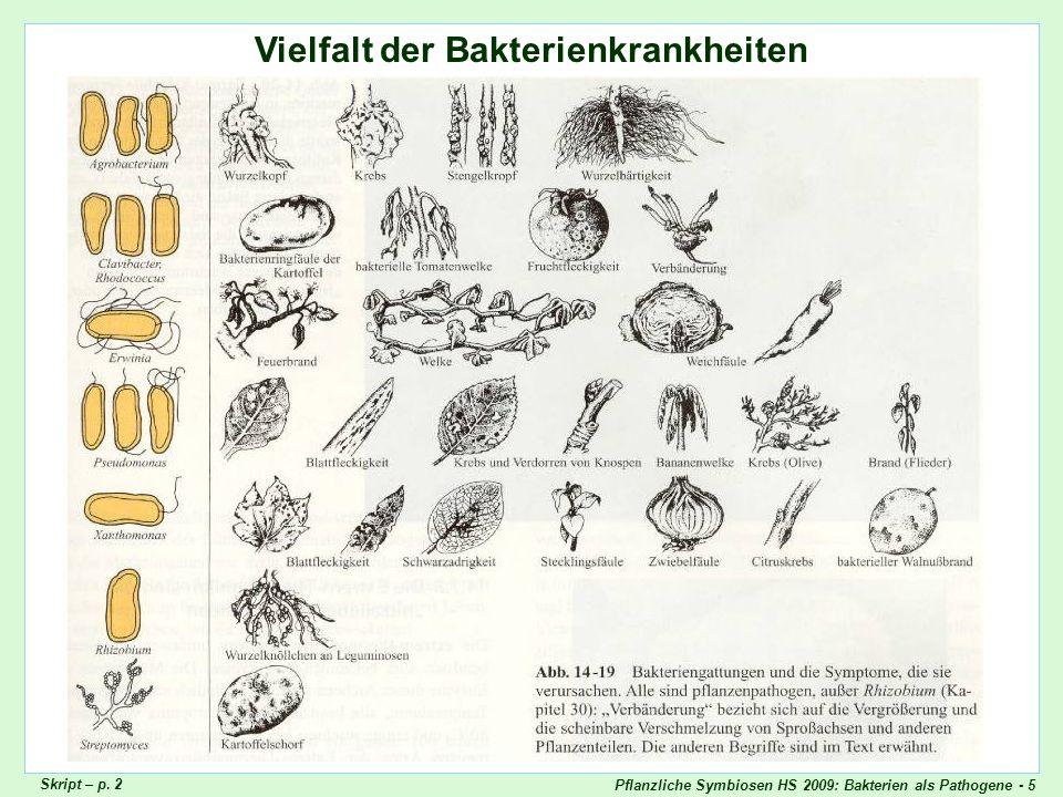Pflanzliche Symbiosen HS 2009: Bakterien als Pathogene - 26 Erwinia carotovora auf Salat Erwinia_carotovora_Salat