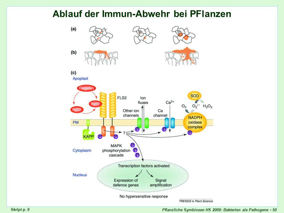 Pflanzliche Symbiosen HS 2009: Bakterien als Pathogene - 50 Review Innate Immunity Ablauf der Immun-Abwehr bei PFlanzen Skript p. 9