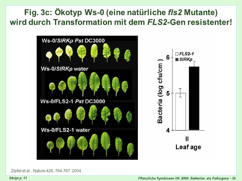 Pflanzliche Symbiosen HS 2009: Bakterien als Pathogene - 55 Zipfel Fig. 3c Fig. 3c: Ökotyp Ws-0 (eine natürliche fls2 Mutante) wird durch Transformati