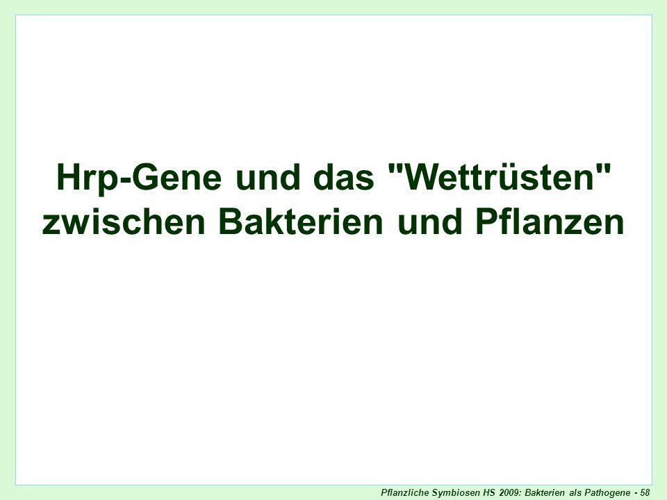 Pflanzliche Symbiosen HS 2009: Bakterien als Pathogene - 58 Angriffswaffen von Bakterien Hrp-Gene und das