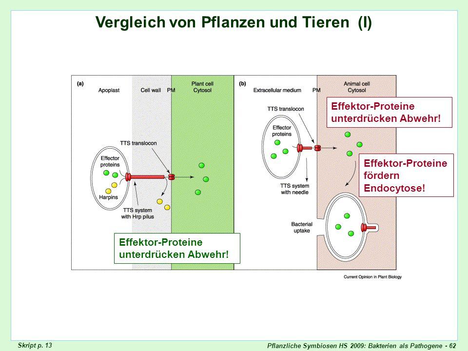 Pflanzliche Symbiosen HS 2009: Bakterien als Pathogene - 62 Vergleich von Pflanzen und Tieren (I) Vergleich Pflanzen/Tiere I Skript p. 13 Effektor-Pro