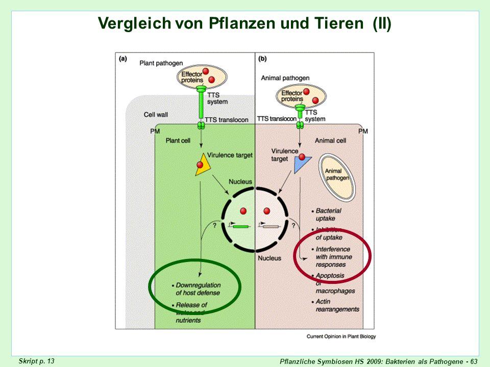 Pflanzliche Symbiosen HS 2009: Bakterien als Pathogene - 63 Vergleich von Pflanzen und Tieren (II) Vergleich Pflanzen/Tiere II Skript p. 13