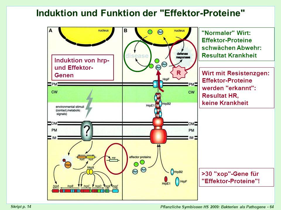 Pflanzliche Symbiosen HS 2009: Bakterien als Pathogene - 64 Induktion und Funktion der