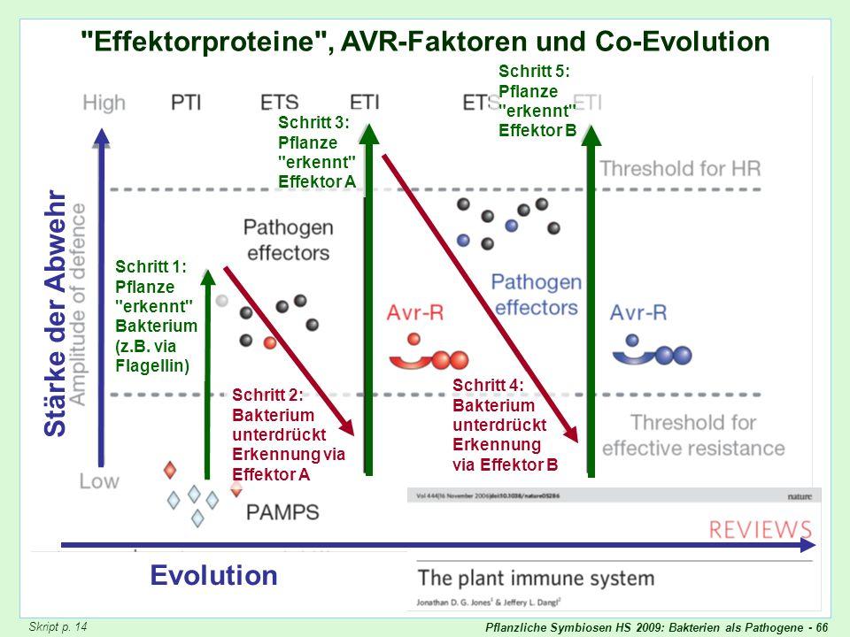 Pflanzliche Symbiosen HS 2009: Bakterien als Pathogene - 66