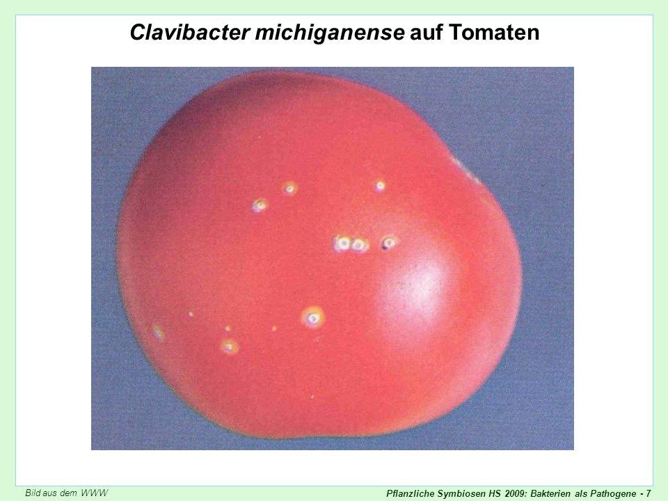 Pflanzliche Symbiosen HS 2009: Bakterien als Pathogene - 38 Entsprechendes Vorgehen für molekulare Studien Molekulare Version Kochsche Postulate Ist ein gegebenes Molekül kausal für die Krankheit wichtig? Das Molekül muss stetig im kranken Gewebe vorhanden sein.