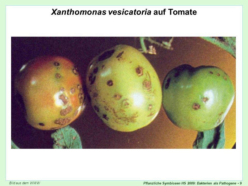Pflanzliche Symbiosen HS 2009: Bakterien als Pathogene - 20 Antagonistische Symbiose Bakterien-Pflanzen: Agrobacterium tumefaciens (Erreger der Wurzelhalsgalle) Agrobacterium (Schopfer) Skript p.