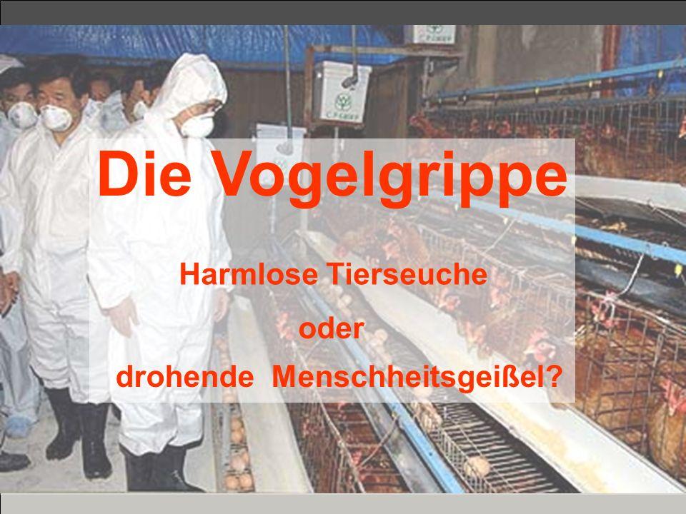 Die Vogelgrippe Harmlose Tierseuche oder drohende Menschheitsgeißel?