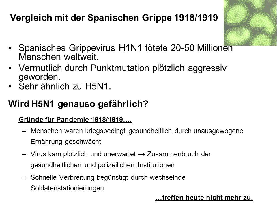 Spanisches Grippevirus H1N1 tötete 20-50 Millionen Menschen weltweit. Vermutlich durch Punktmutation plötzlich aggressiv geworden. Sehr ähnlich zu H5N