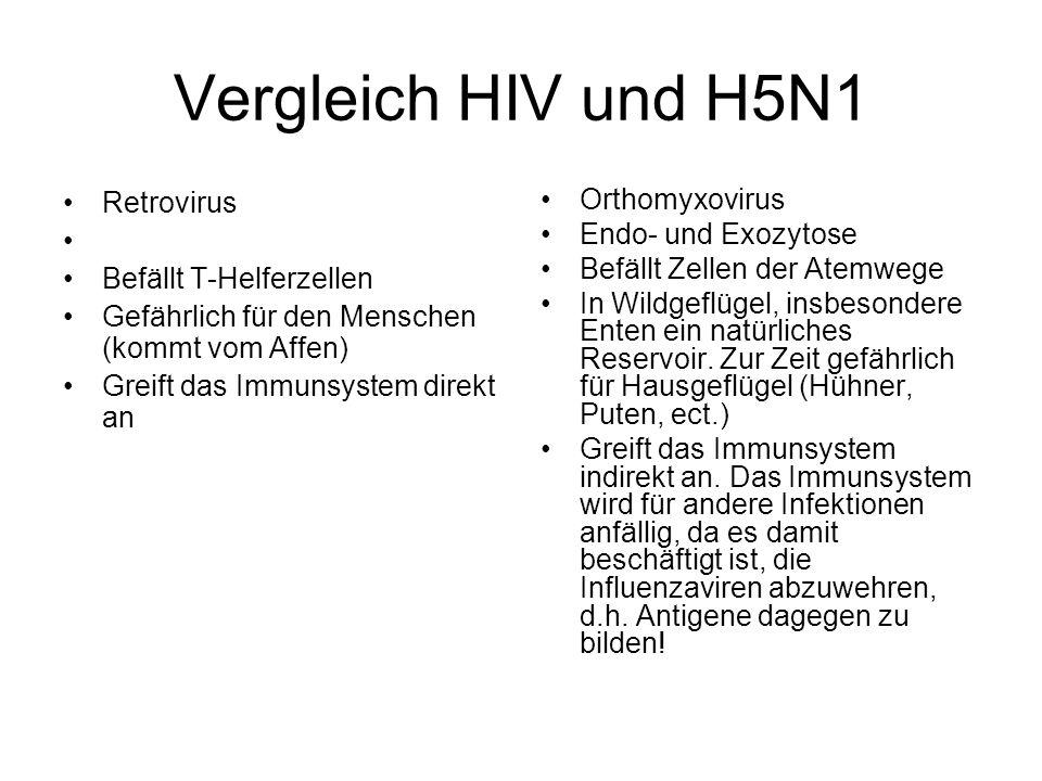Vergleich HIV und H5N1 Retrovirus Befällt T-Helferzellen Gefährlich für den Menschen (kommt vom Affen) Greift das Immunsystem direkt an Orthomyxovirus