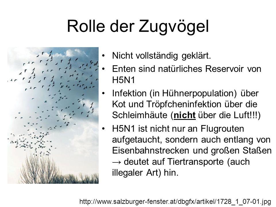 Rolle der Zugvögel Nicht vollständig geklärt. Enten sind natürliches Reservoir von H5N1 Infektion (in Hühnerpopulation) über Kot und Tröpfcheninfektio