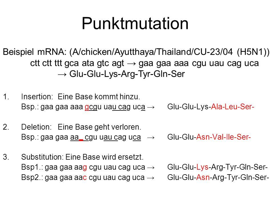 Punktmutation 1. Insertion: Eine Base kommt hinzu. Bsp.: gaa gaa aaa gcgu uau cag uca Glu-Glu-Lys-Ala-Leu-Ser- 2. Deletion: Eine Base geht verloren. B