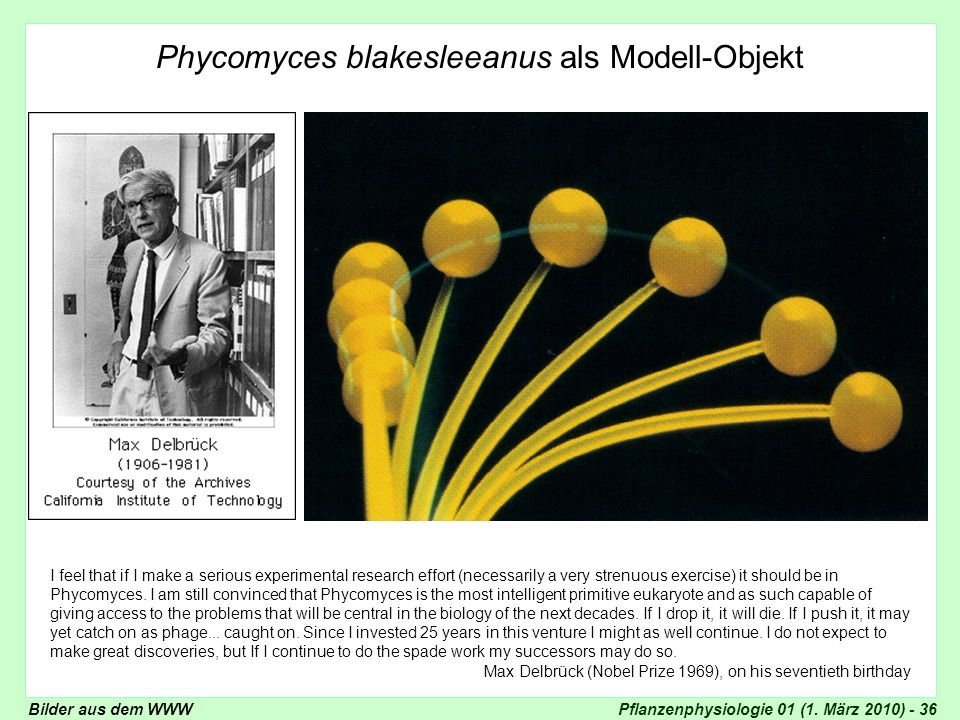 Pflanzenphysiologie 01 (1. März 2010) - 36 Phycomyces blakesleeanus als Modell-Objekt I feel that if I make a serious experimental research effort (ne