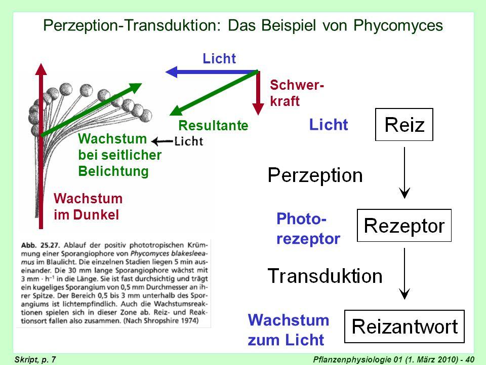 Pflanzenphysiologie 01 (1. März 2010) - 40 Phycomyces: Skript Wachstum im Dunkel Wachstum bei seitlicher Belichtung Licht Schwer- kraft Resultante Lic