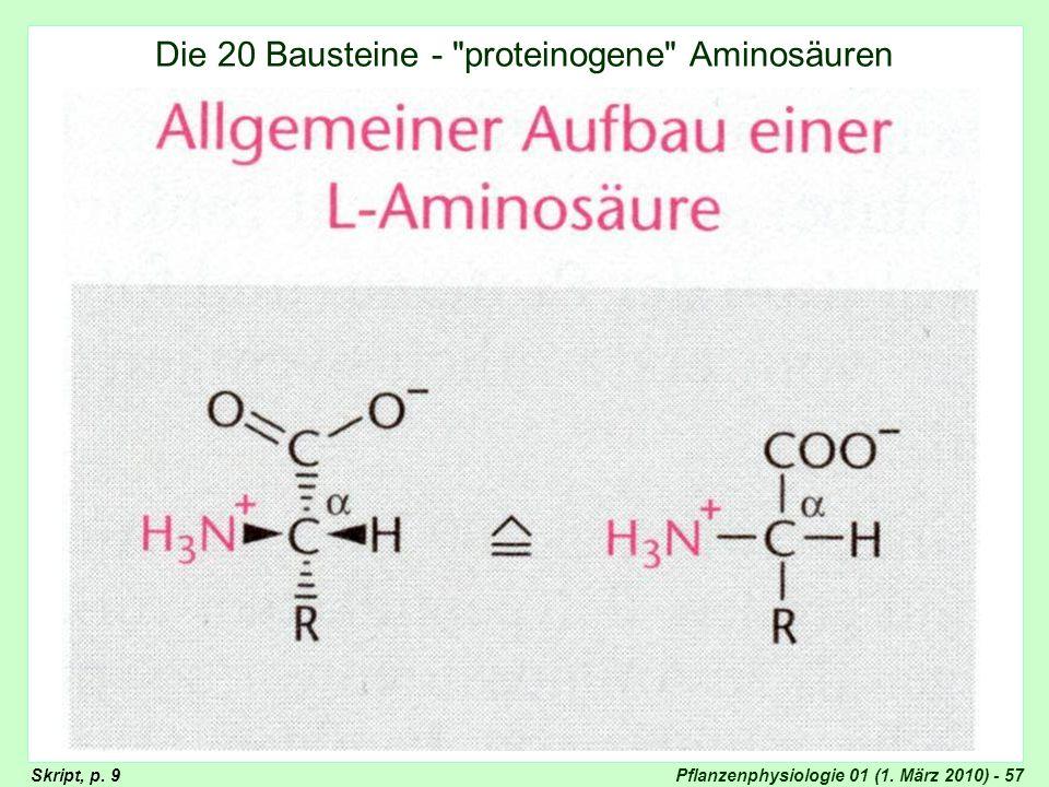 Pflanzenphysiologie 01 (1. März 2010) - 57 Aufbau der Aminosäuren Die 20 Bausteine -
