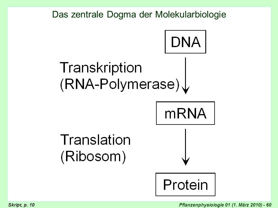 Pflanzenphysiologie 01 (1. März 2010) - 60 Schema zentrales Dogma Das zentrale Dogma der Molekularbiologie Skript, p. 10